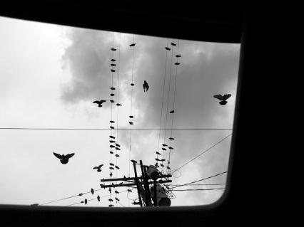 birds)A